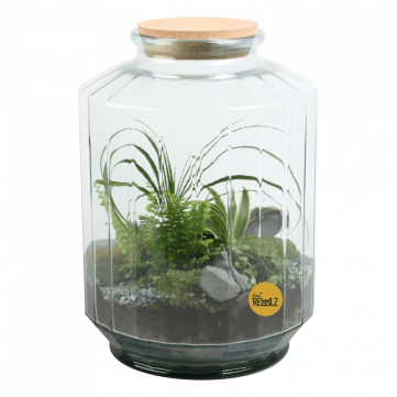 Noble Soldier - Terrarium - Plant Rebelz (2)