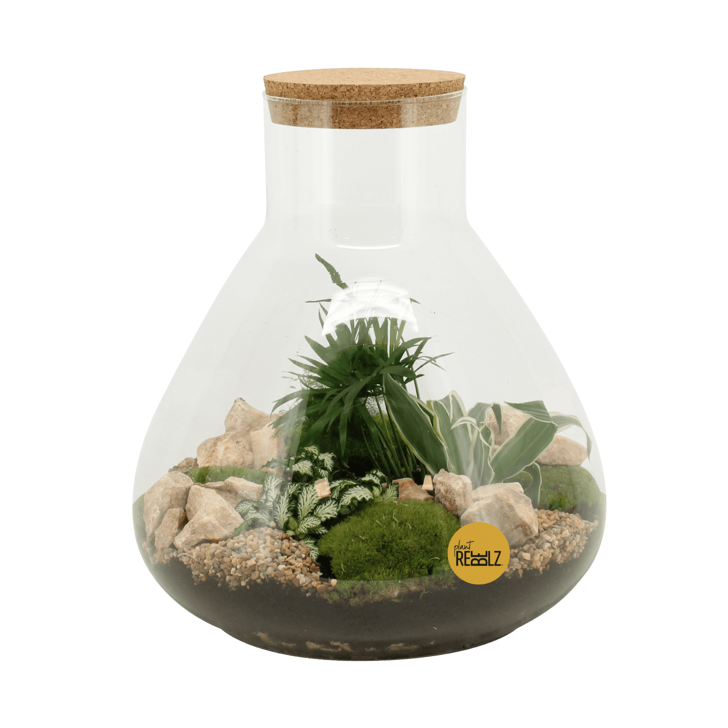 Sharp Soldier - Terrarium - Plant Rebelz (1)