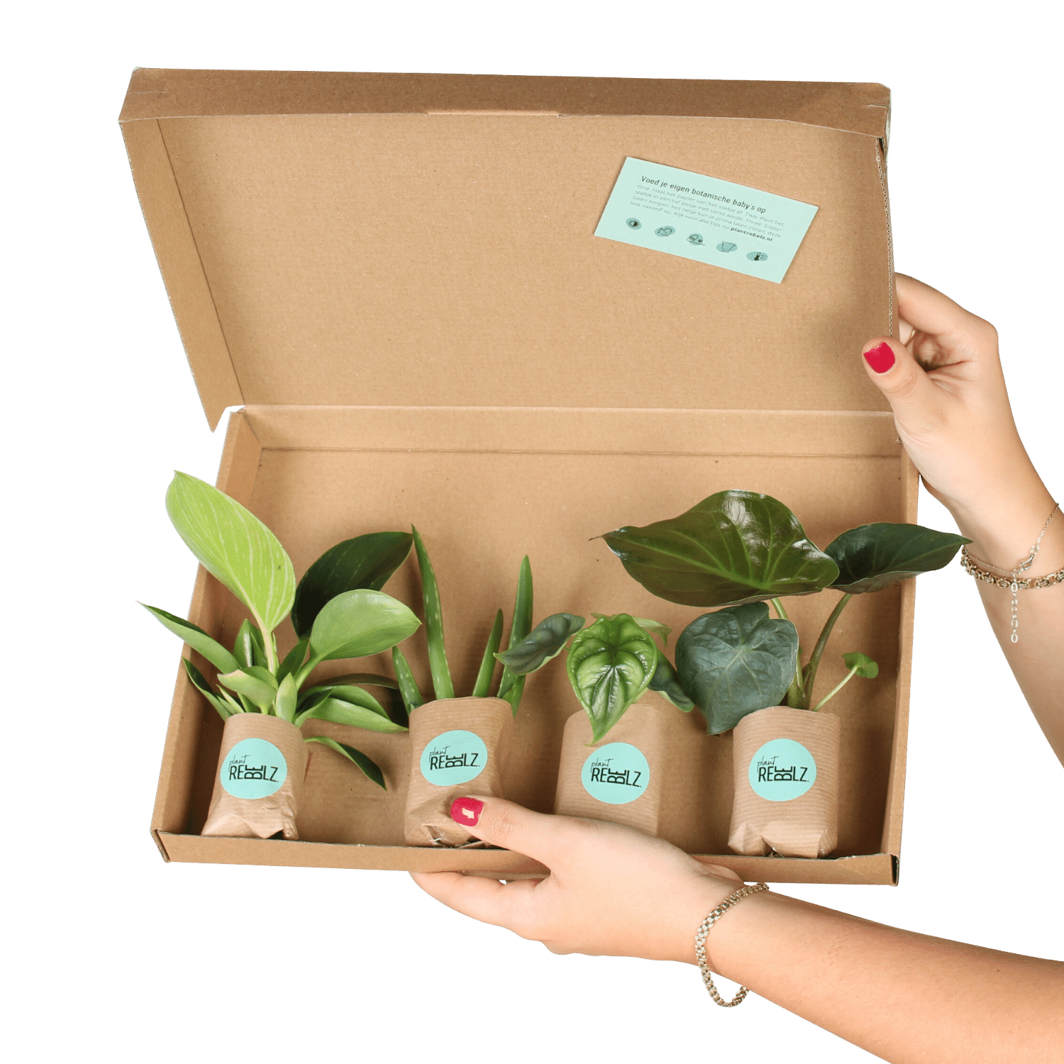 Gift voucher - plant rebelz -cuttings box - cuttings subscription